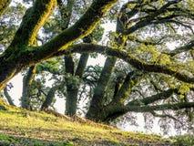Bäume und Felsen in der hügeligen Wiese Stockbild