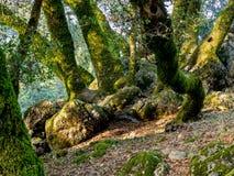 Bäume und Felsen in der hügeligen Wiese Lizenzfreie Stockfotos