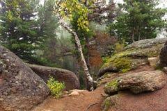Bäume und Felsen im Nebel lizenzfreies stockbild
