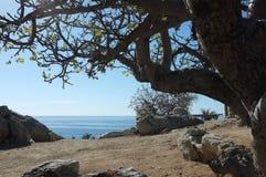 Bäume und Felsen nähern sich Meer Lizenzfreie Stockfotos