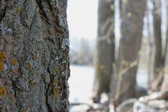 Bäume und Fluss Stockfoto