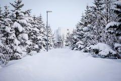 Bäume und Gehweg im Schnee Stockbild