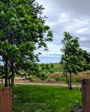 Bäume und grünes Gras lizenzfreie stockfotos