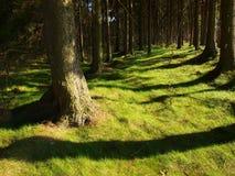 Bäume und grünes Gras Lizenzfreies Stockbild