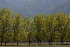 Bäume und Gras Lizenzfreies Stockfoto