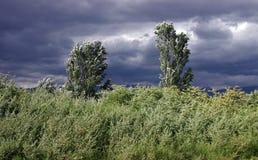 Bäume und Gras Stockfoto