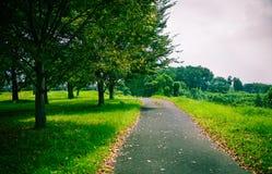 Bäume und Gras lizenzfreies stockbild