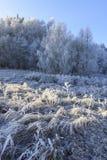 Bäume und Gras bedeckt mit Frost Stockfoto