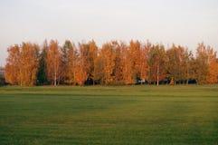 Bäume und Gras im Herbst Stockbild