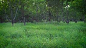 Bäume und Gras im Park stock video footage