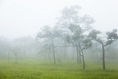 Bäume und Gras morgens Stockfotos