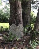 Bäume und Grundstein lizenzfreie stockbilder