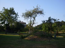 Bäume und Hügel Stockbilder
