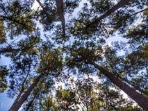 Bäume und Himmel stockfoto