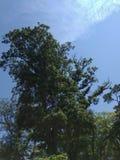 Bäume und Himmel stockbilder