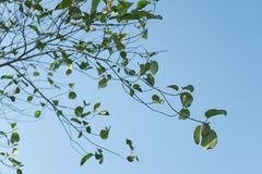 Bäume und Himmel Lizenzfreie Stockfotos