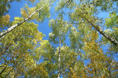 Bäume und Himmel Stockfotos