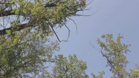Bäume und Himmel stock video footage