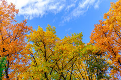 Bäume und Himmel Lizenzfreie Stockbilder