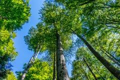 Bäume und Himmel Stockfotografie