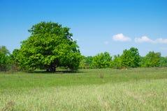 Bäume und Himmel Lizenzfreies Stockbild