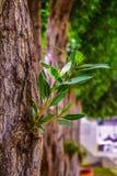 Bäume und Himmel, die voll Schönheit nach Hintergrund suchen lizenzfreie stockbilder