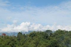 Bäume und Himmel, so schön, Version 14 Stockbild