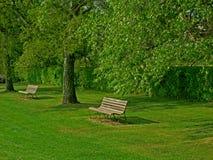 Bäume und Holzbank, die intersting abstrakte Formen bilden Lizenzfreie Stockbilder