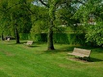 Bäume und Holzbank, die intersting abstrakte Formen bilden Stockbild