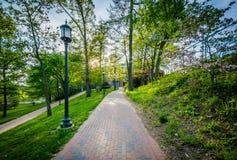 Bäume und lightpost entlang einem Gehweg an den Universität John Hopkins, lizenzfreie stockfotografie