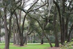 Bäume und Moos Lizenzfreie Stockfotos
