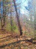 Bäume und Natur Stockfotografie