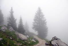 Bäume und Nebel Lizenzfreies Stockfoto