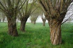 Bäume und Nebel Stockfotografie