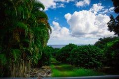 Bäume und Ozean im Hintergrund, Hilo Hawaii Stockfotos
