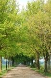 Bäume und Pfad lizenzfreie stockfotos