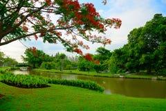 Bäume und Rasen nahe einem kleinen Teich Stockfoto
