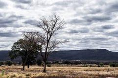 Bäume und regnerische Himmel über einem trockenen Feld Lizenzfreies Stockfoto