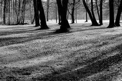 Bäume und Schatten Stockfoto