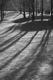 Bäume und Schatten Stockfotografie