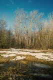 Bäume und schmelzender Schnee in einer Wiese Früher Frühling Stockfotos