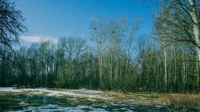 Bäume und schmelzender Schnee in einer Wiese Früher Frühling Lizenzfreies Stockbild