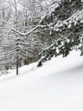 Bäume und Schnee Stockfotos