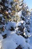 Bäume und Schnee Lizenzfreies Stockfoto