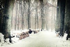 Bäume und Schnee, Schuss von oben Stockbild