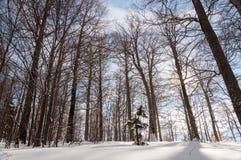 Bäume und Schnee, Schuss von oben lizenzfreie stockfotos