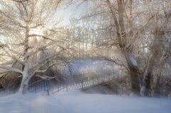 Bäume und Schnee, Schuss von oben Stockbilder