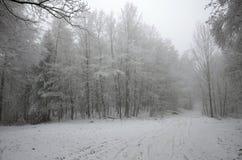 Bäume und Schnee, Schuss von oben Lizenzfreie Stockbilder