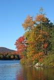 Bäume und See Lizenzfreies Stockfoto