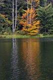 Bäume und See Stockfotos